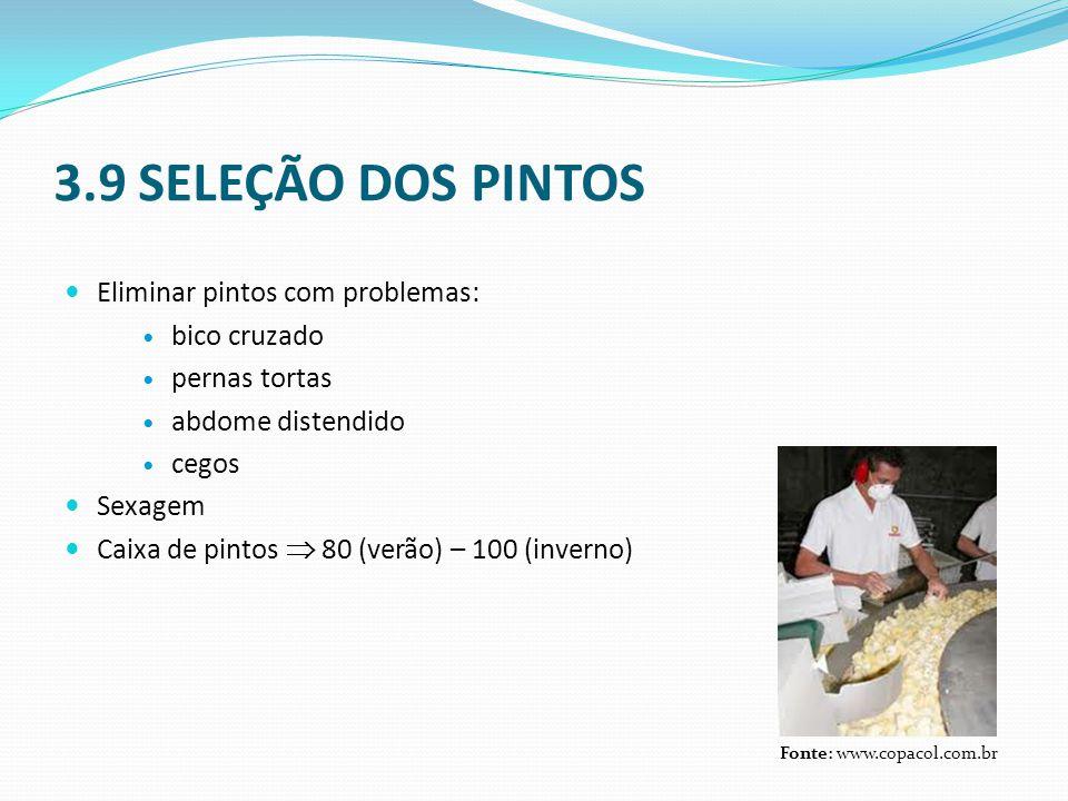 3.9 SELEÇÃO DOS PINTOS  Eliminar pintos com problemas:  bico cruzado  pernas tortas  abdome distendido  cegos  Sexagem  Caixa de pintos  80 (v