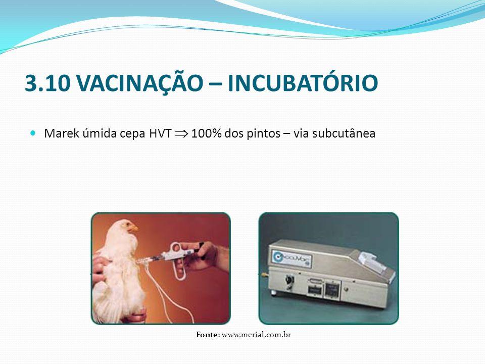 3.10 VACINAÇÃO – INCUBATÓRIO  Marek úmida cepa HVT  100% dos pintos – via subcutânea Fonte: www.merial.com.br