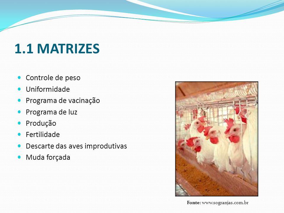 1.1 MATRIZES  Controle de peso  Uniformidade  Programa de vacinação  Programa de luz  Produção  Fertilidade  Descarte das aves improdutivas  M