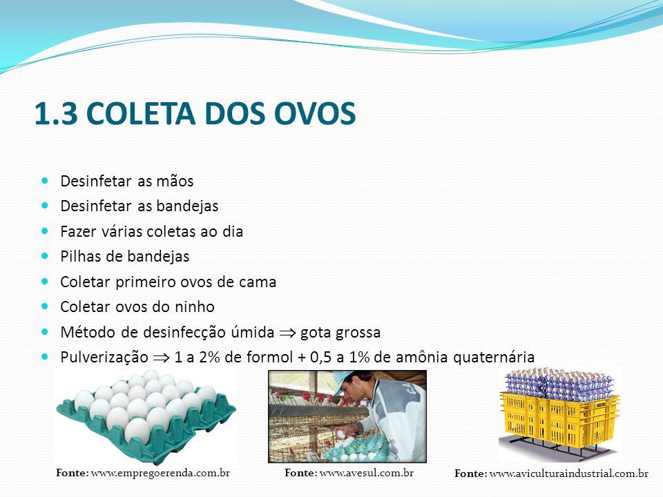 1.3 COLETA DOS OVOS  Desinfetar as mãos  Desinfetar as bandejas  Fazer várias coletas ao dia  Pilhas de bandejas  Coletar primeiro ovos de cama 
