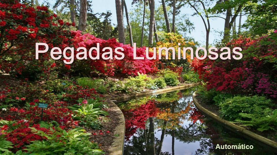 Texto : Joana de Angelis Música:Origem- Andromeda BIAJOVA SLIDES AMOR À VIDA