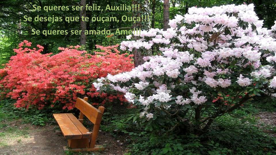 Se queres ser feliz, Auxilia!!! Se desejas que te ouçam, Ouça!!! Se queres ser amado, Ame!!!