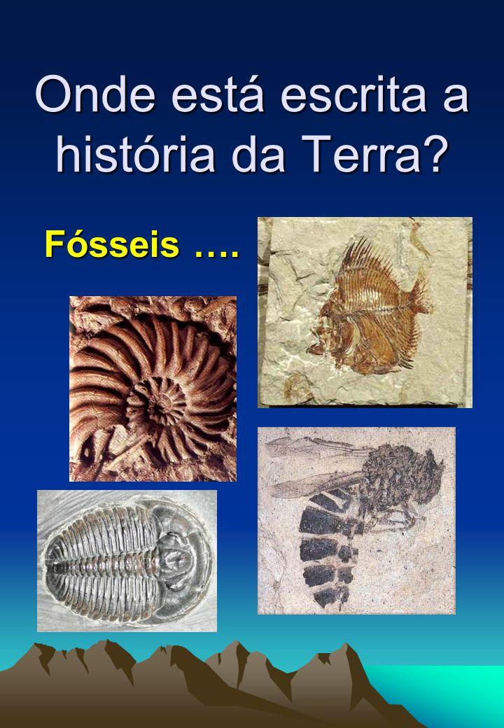 Fósseis ….
