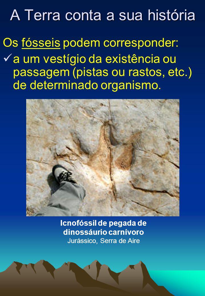 Os fósseis podem corresponder:  a um vestígio da existência ou passagem (pistas ou rastos, etc.) de determinado organismo. A Terra conta a sua histór
