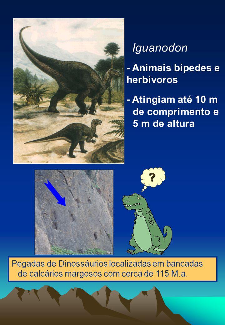 Iguanodon - Animais bípedes e herbívoros - Atingiam até 10 m de comprimento e 5 m de altura Pegadas de Dinossáurios localizadas em bancadas de calcários margosos com cerca de 115 M.a.