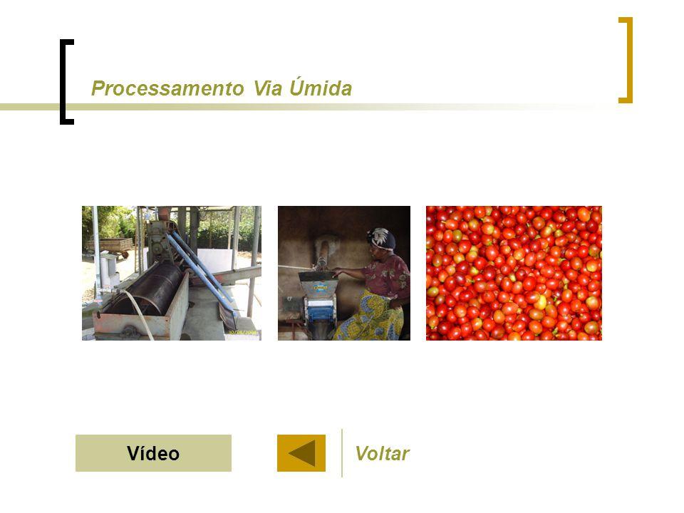 VídeoVoltar Processamento Via Úmida