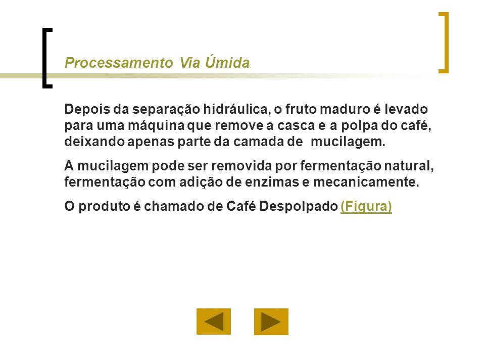 O processamento via úmida exige: a) Um grande investimento inicial (Figura)(Figura) b) Tratamento de águas residuárias (Figura)(Figura) c) Pequenos secadores e terreiros (Figura)(Figura) d) Baixo tempo de secagem Processamento Via Úmida