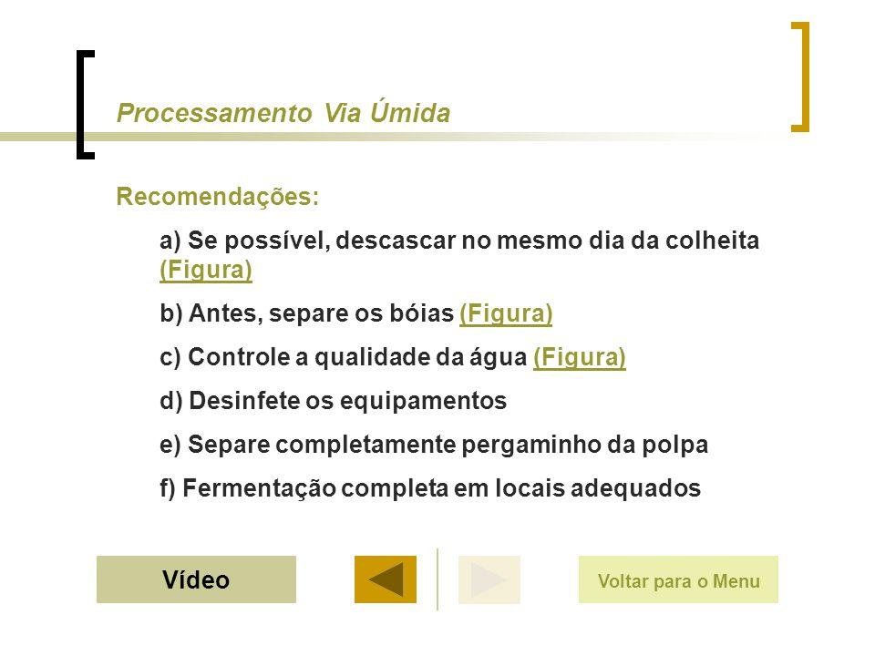 Recomendações: a) Se possível, descascar no mesmo dia da colheita (Figura) (Figura) b) Antes, separe os bóias (Figura)(Figura) c) Controle a qualidade