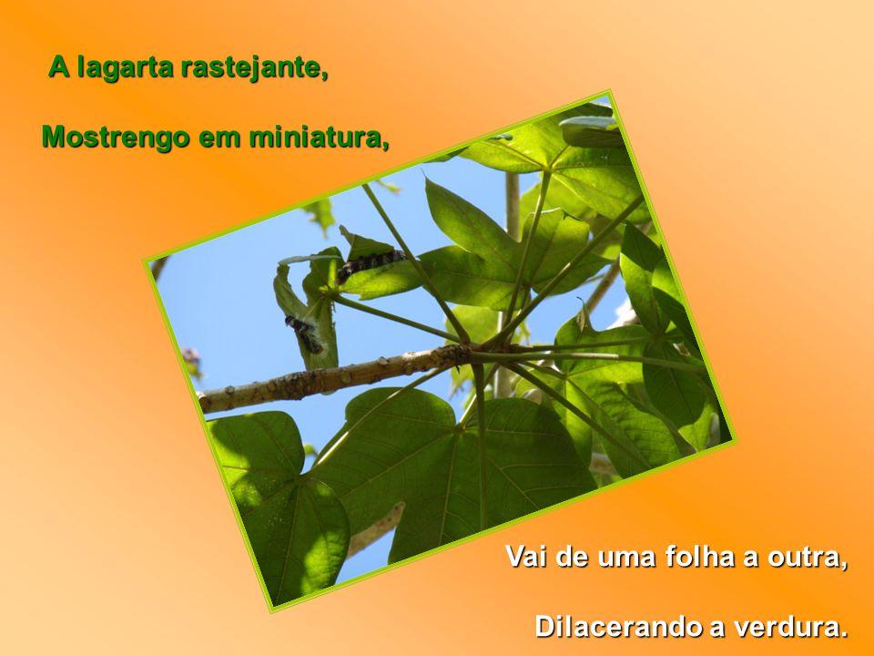 A lagarta rastejante, A lagarta rastejante, Mostrengo em miniatura, Mostrengo em miniatura, Vai de uma folha a outra, Dilacerando a verdura.