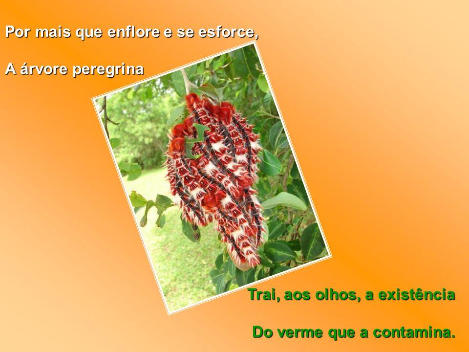 Por mais que enflore e se esforce, A árvore peregrina Trai, aos olhos, a existência Do verme que a contamina.