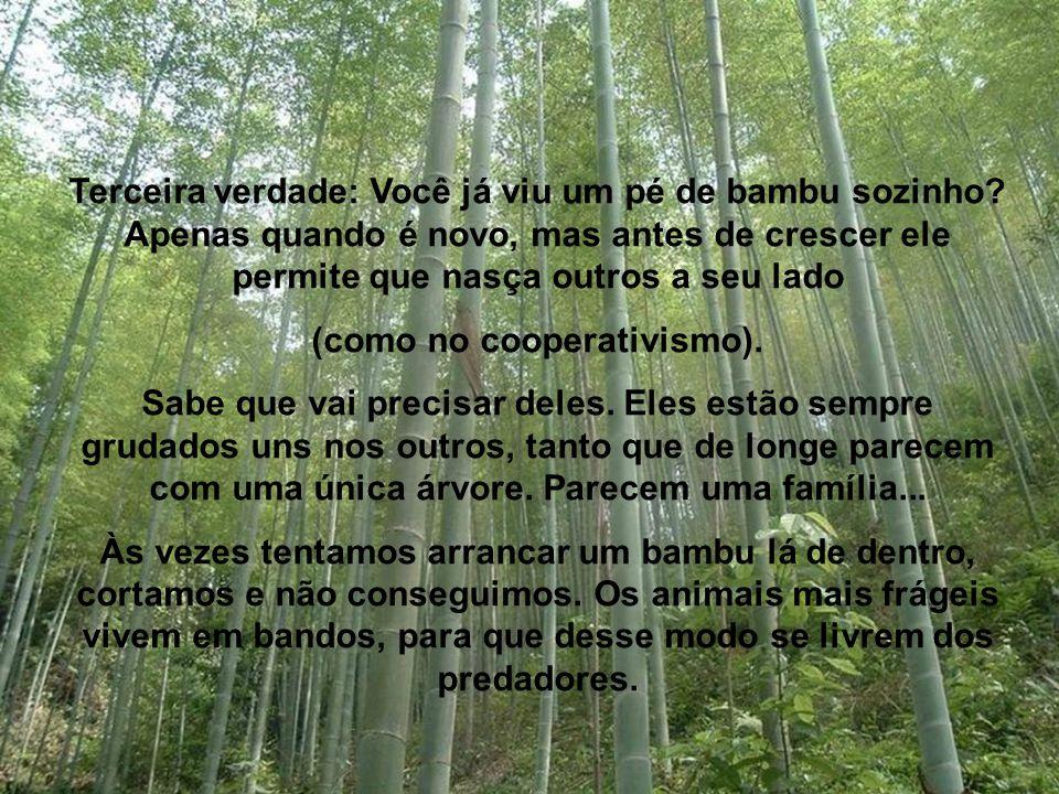 Terceira verdade: Você já viu um pé de bambu sozinho.