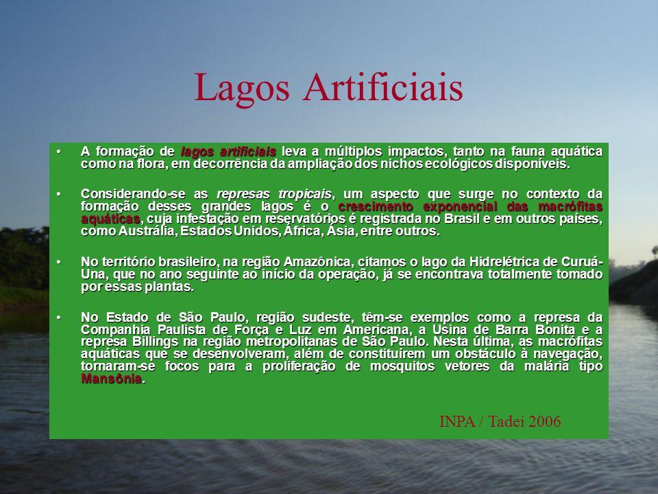 Lagos Artificiais •A formação de lagos artificiais leva a múltiplos impactos, tanto na fauna aquática como na flora, em decorrência da ampliação dos n