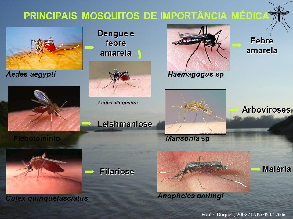 PRINCIPAIS MOSQUITOS DE IMPORTÂNCIA MÉDICA Dengue e febre amarela Aedes aegypti Culex quinquefasciatus Haemagogus sp Mansonia sp Filariose Febre amare