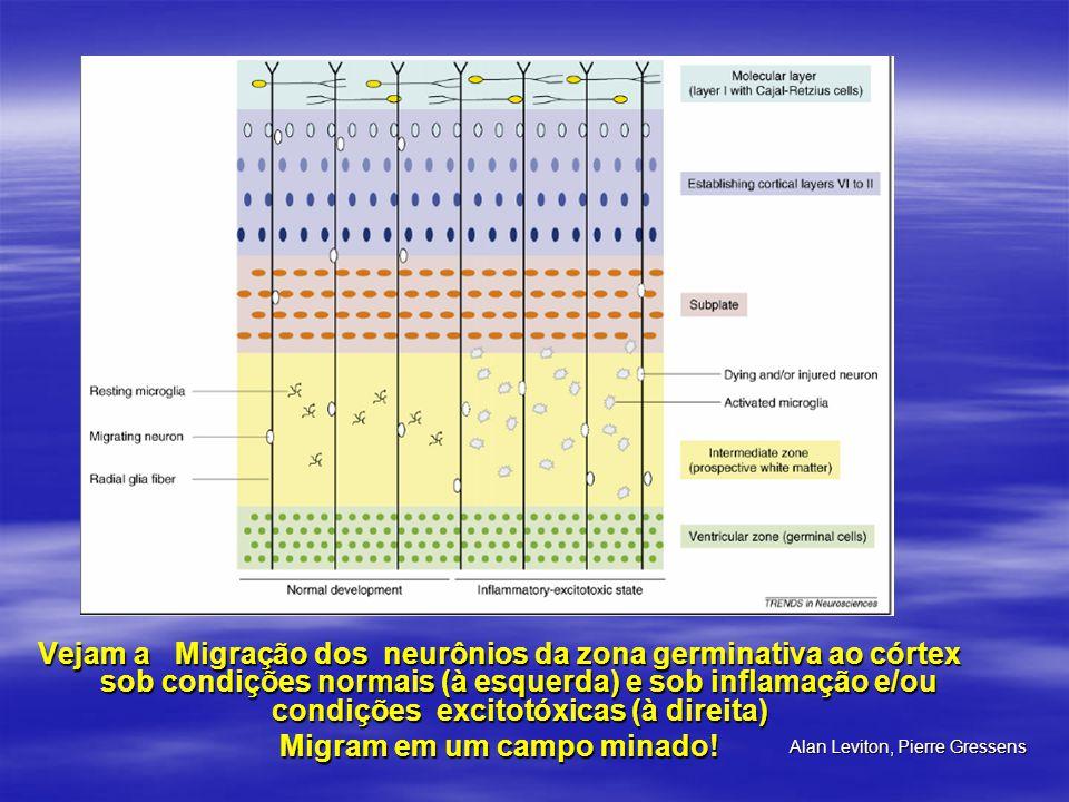 Vejam a Migração dos neurônios da zona germinativa ao córtex sob condições normais (à esquerda) e sob inflamação e/ou condições excitotóxicas (à direi