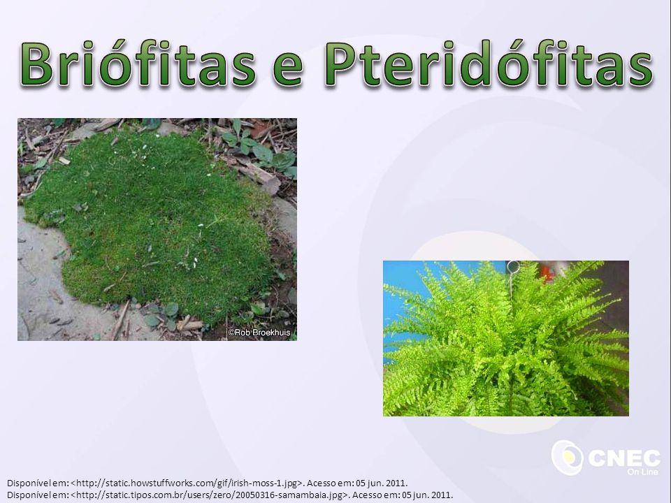 Selaginelas  Heterosporia: dois tipos de esporos  Megásporo  Micróscopo  Heterofílicas: dois tipos de folhas  Folhas fotossintetizantes  Estróbilos que produzem esporos Disponível em:.