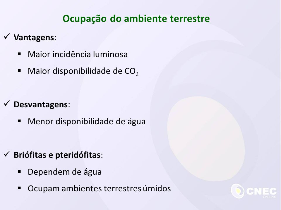  Vantagens:  Maior incidência luminosa  Maior disponibilidade de CO 2  Desvantagens:  Menor disponibilidade de água  Briófitas e pteridófitas: 