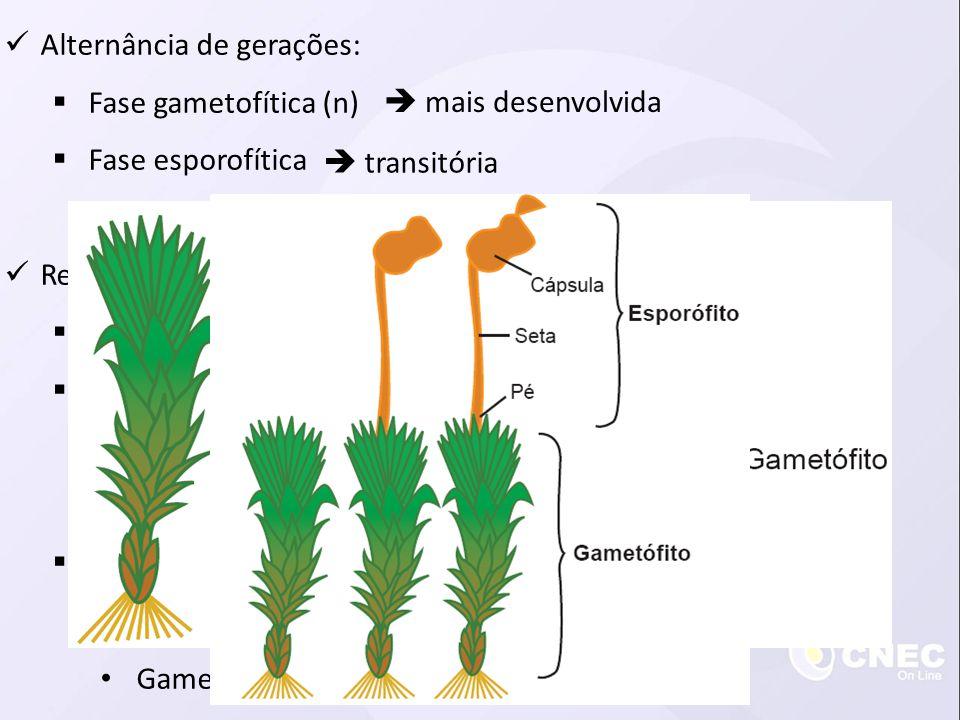  Alternância de gerações:  Fase gametofítica (n)  Fase esporofítica  Reprodução sexuada:  Maioria das espécies é dioica, algumas são monoicas  P