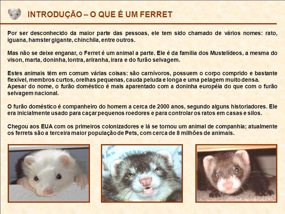 IMPORTAÇÃO E COMERCIALIZAÇÃO Para quem não sabe, os FERRETS que vivem no Brasil são importados por uma empresa de nome PRO PET – PROFESSIONAL PET SUPPLIERS, a qual, além de importar o animal, importa a ração, e controla a distribuição de vacinas em SP, sem nenhum concorrente, estando, portanto, livre para arbitrar valores e informações.