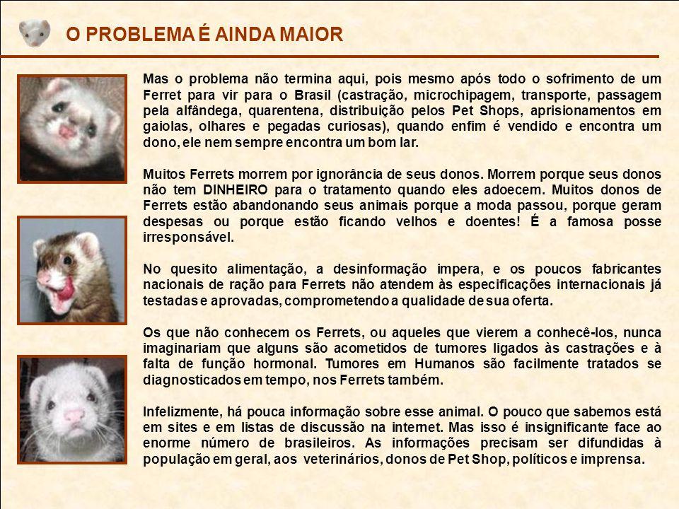 DESABAFO E PEDIDO DE AJUDA - Não existem organizações, nem instituições de Defesa dos Animais que conhecem o que é um Ferret.
