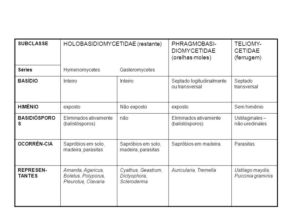 CLASSEASCOMYCETESBASIDIOMYCETES PAREDE CELULAR Quitina e Beta- GlucanoQuitina e beta-glucano TALO Micélio com hifas bem desenvolvidas, ramificadas e septadas SEPTO Poro simplesPoro dolíporo FASE DICARIÓTICA Curta, hifas ascóginasLonga, micélio secundário REPRODUÇÃO GAMÉTICA Asco (endósporos)Basidios (exósporos) CORPO DE FRUTIFICAÇÃO AscocarpoBasidiocarpo REPRODUÇÃO VEGETATIVA Brotamento, Fissão, fragmentação, Artrósporos, Clamidósporos, Conídios Brotamento, Fragmentação, Artrósporos, Conídios MANUTENÇÃO DA DICARIOSE Ganchos ou grampos de crouzier Ansa, fíbula ou clamp connections DICARIOTIZAÇÃO Copulação de gametângios, Contato de gametângios, espermatização, somatogamia Espermatização, somatogamia Comparação entre as classes Ascomycetes & Basidiomycetes