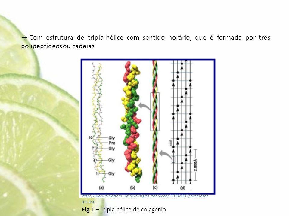 → Com estrutura de tripla-hélice com sentido horário, que é formada por três polipeptídeos ou cadeias http://www.freedom.inf.br/artigos_tecnicos/21082