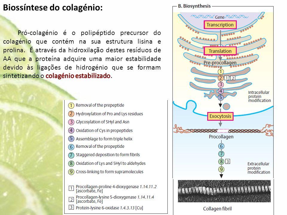 Biossíntese do colagénio: