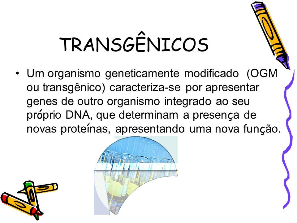 TRANSGÊNICOS •Um organismo geneticamente modificado (OGM ou transgênico) caracteriza-se por apresentar genes de outro organismo integrado ao seu pr ó