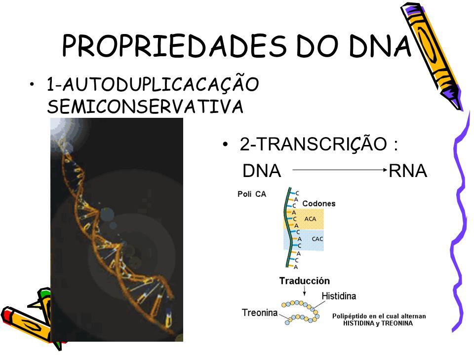 Produção de insulina por bactéria transgênica