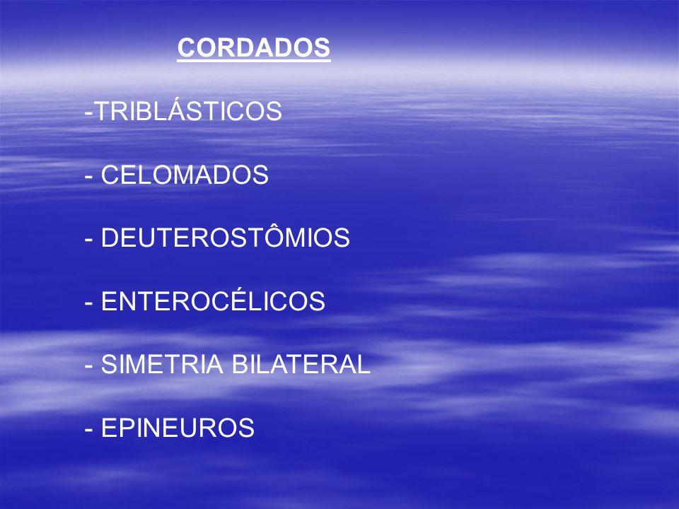 CORDADOS -TRIBLÁSTICOS - CELOMADOS - DEUTEROSTÔMIOS - ENTEROCÉLICOS - SIMETRIA BILATERAL - EPINEUROS