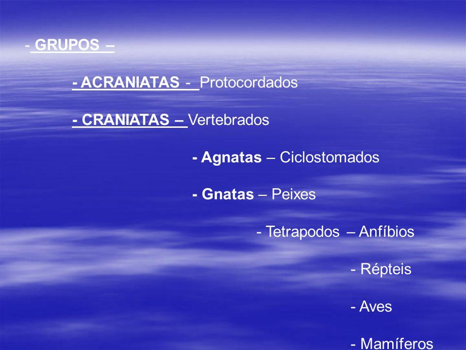 - GRUPOS – - ACRANIATAS - Protocordados - CRANIATAS – Vertebrados - Agnatas – Ciclostomados - Gnatas – Peixes - Tetrapodos – Anfíbios - Répteis - Aves