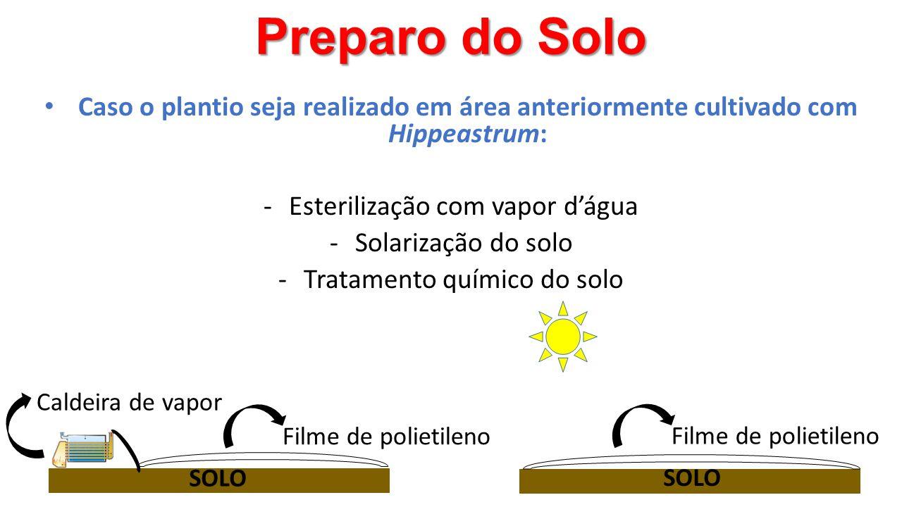 Preparo do Solo Filme de polietileno Caldeira de vapor SOLO Filme de polietileno • Caso o plantio seja realizado em área anteriormente cultivado com H