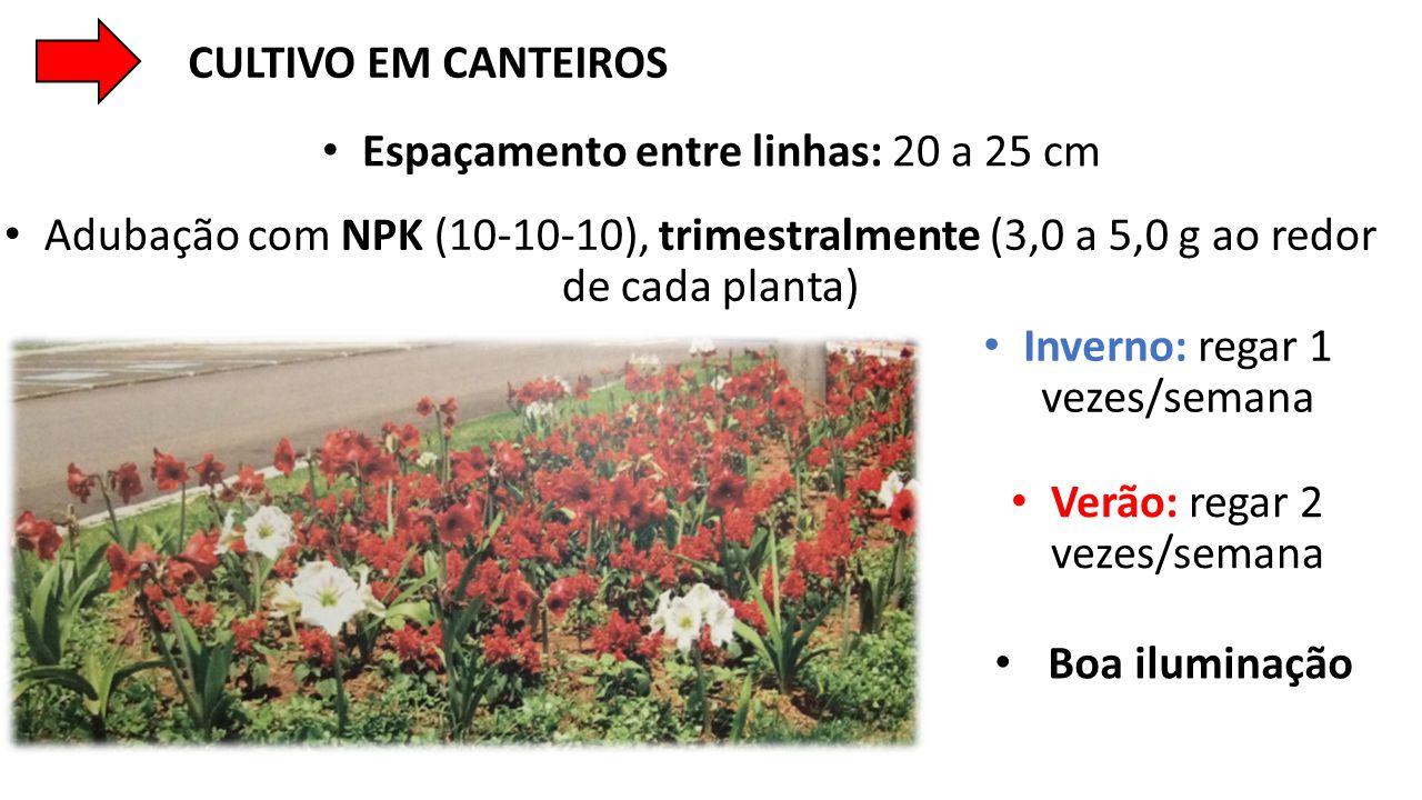 • Espaçamento entre linhas: 20 a 25 cm • Adubação com NPK (10-10-10), trimestralmente (3,0 a 5,0 g ao redor de cada planta) • Inverno: regar 1 vezes/s