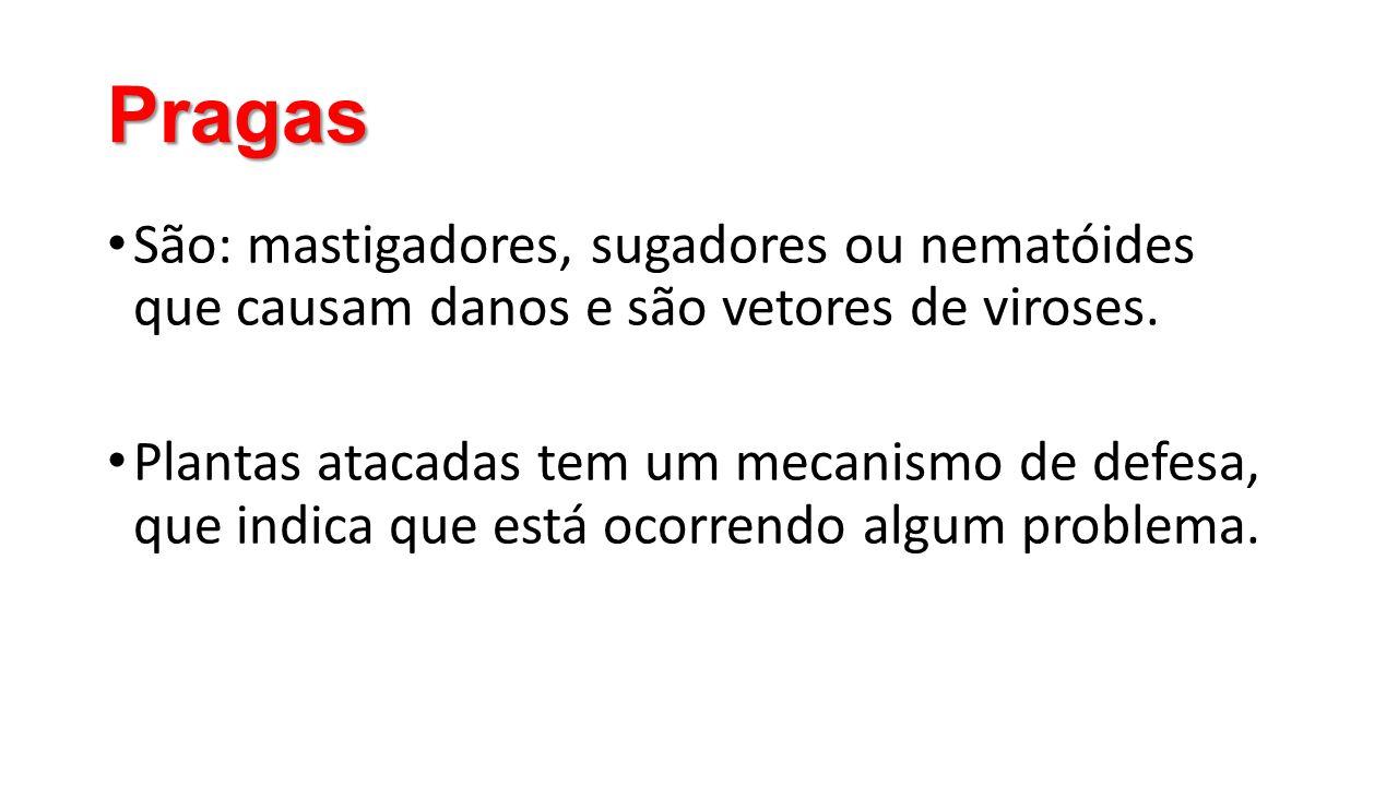 Pragas • São: mastigadores, sugadores ou nematóides que causam danos e são vetores de viroses. • Plantas atacadas tem um mecanismo de defesa, que indi