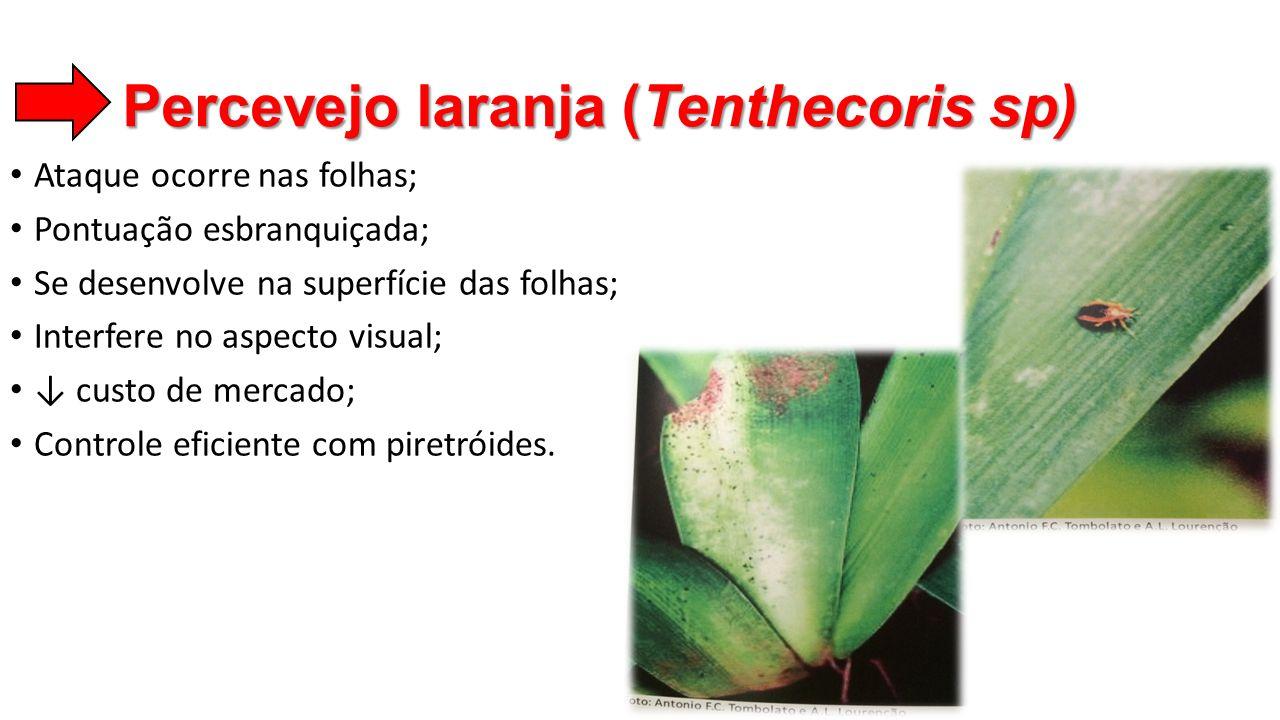 Percevejo laranja (Tenthecoris sp) • Ataque ocorre nas folhas; • Pontuação esbranquiçada; • Se desenvolve na superfície das folhas; • Interfere no asp