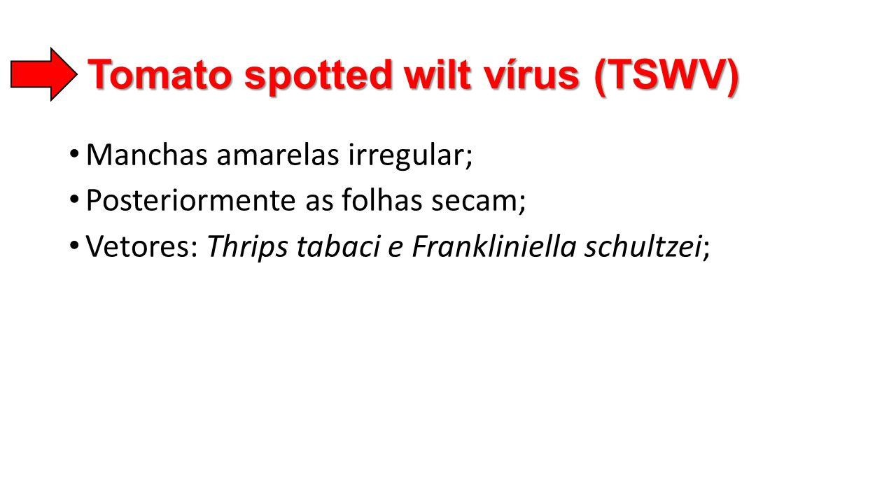 Tomato spotted wilt vírus (TSWV) • Manchas amarelas irregular; • Posteriormente as folhas secam; • Vetores: Thrips tabaci e Frankliniella schultzei;