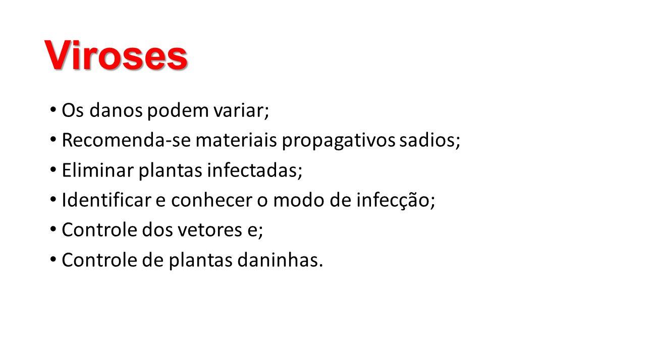 Viroses • Os danos podem variar; • Recomenda-se materiais propagativos sadios; • Eliminar plantas infectadas; • Identificar e conhecer o modo de infec