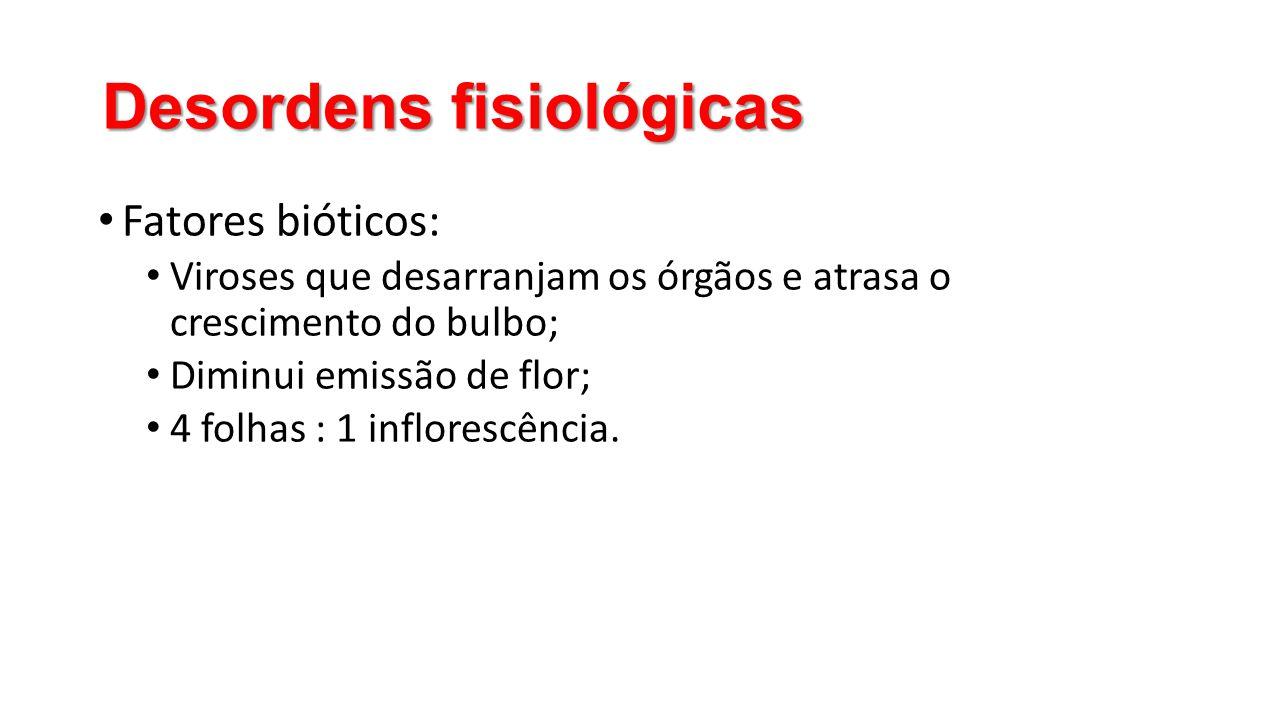 Desordens fisiológicas • Fatores bióticos: • Viroses que desarranjam os órgãos e atrasa o crescimento do bulbo; • Diminui emissão de flor; • 4 folhas