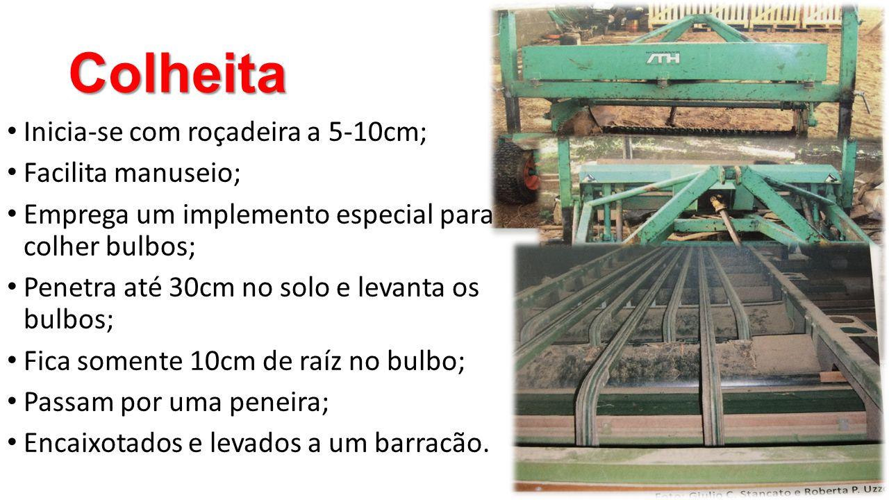 Colheita • Inicia-se com roçadeira a 5-10cm; • Facilita manuseio; • Emprega um implemento especial para colher bulbos; • Penetra até 30cm no solo e le