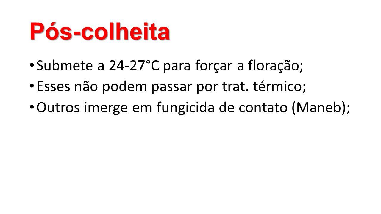 Pós-colheita • Submete a 24-27°C para forçar a floração; • Esses não podem passar por trat. térmico; • Outros imerge em fungicida de contato (Maneb);