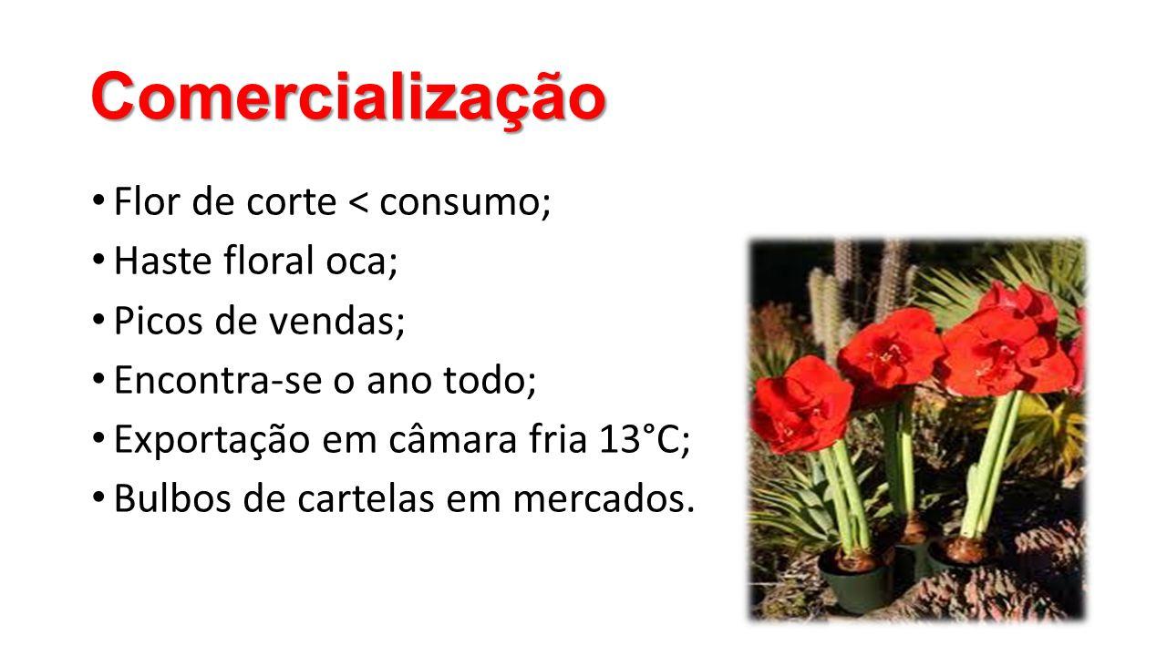 Comercialização • Flor de corte < consumo; • Haste floral oca; • Picos de vendas; • Encontra-se o ano todo; • Exportação em câmara fria 13°C; • Bulbos