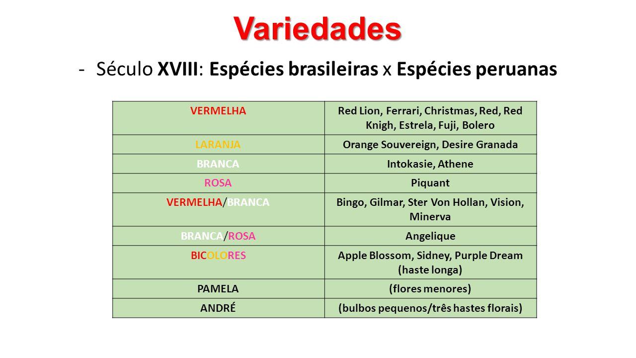 Variedades -Século XVIII: Espécies brasileiras x Espécies peruanas VERMELHARed Lion, Ferrari, Christmas, Red, Red Knigh, Estrela, Fuji, Bolero LARANJA