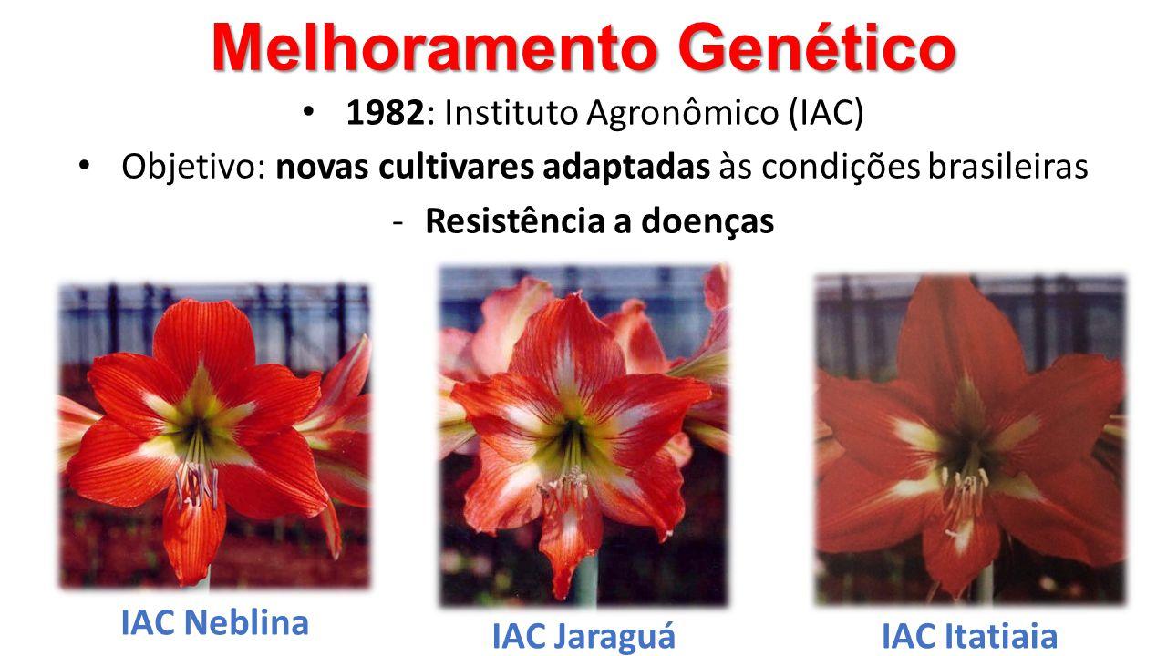 Melhoramento Genético • 1982: Instituto Agronômico (IAC) • Objetivo: novas cultivares adaptadas às condições brasileiras -Resistência a doenças IAC Ne