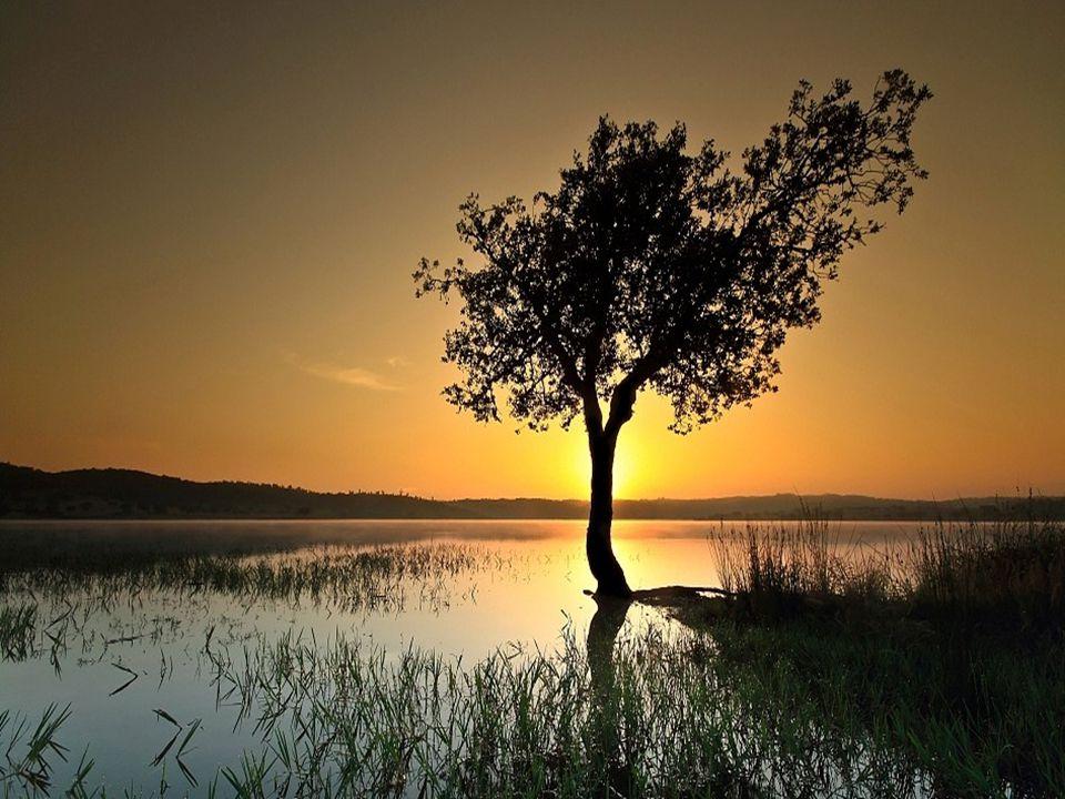 Um abraço especial em cada um... Cléo menegatt cmenegatt@gmail.com Imagens: Google Música:Pebble In The Brook-The Corrs