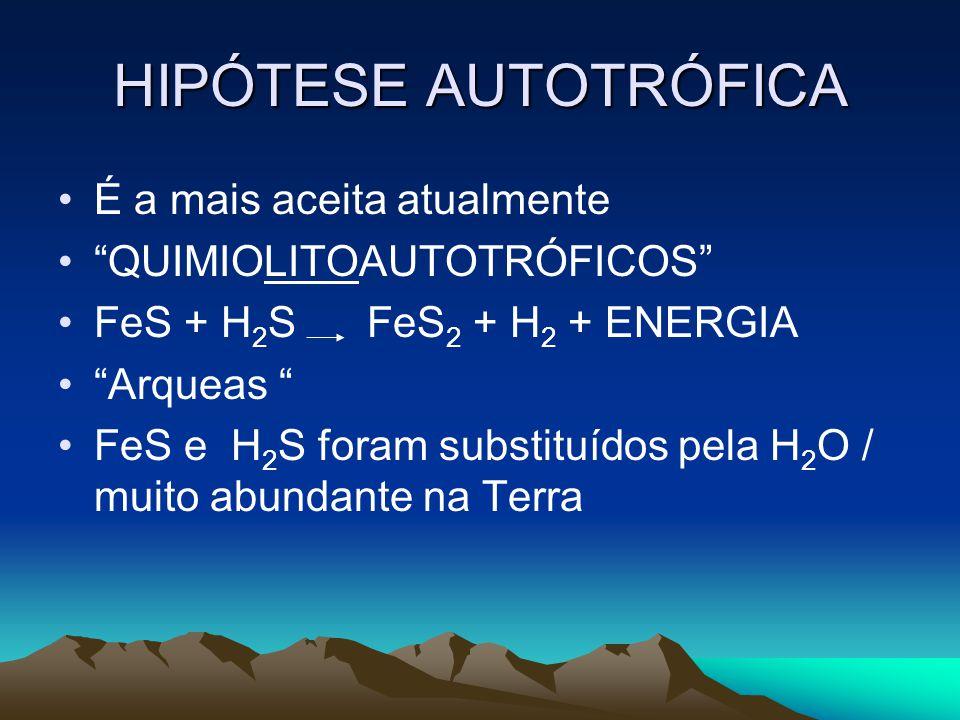 """HIPÓTESE AUTOTRÓFICA •É a mais aceita atualmente •""""QUIMIOLITOAUTOTRÓFICOS"""" •FeS + H 2 S FeS 2 + H 2 + ENERGIA •""""Arqueas """" •FeS e H 2 S foram substituí"""