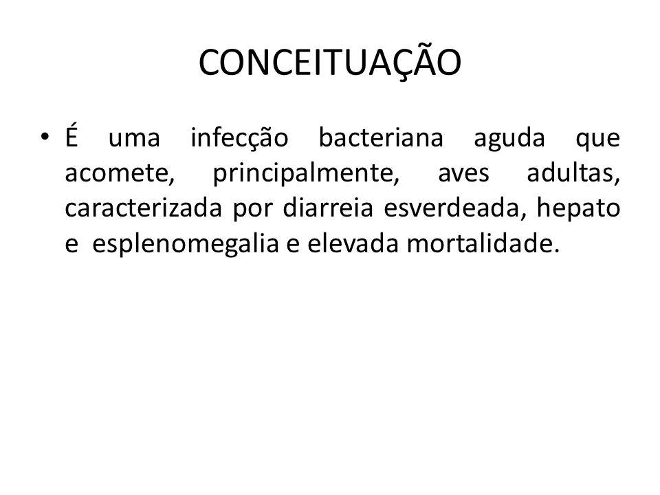 CONCEITUAÇÃO • É uma infecção bacteriana aguda que acomete, principalmente, aves adultas, caracterizada por diarreia esverdeada, hepato e esplenomegalia e elevada mortalidade.