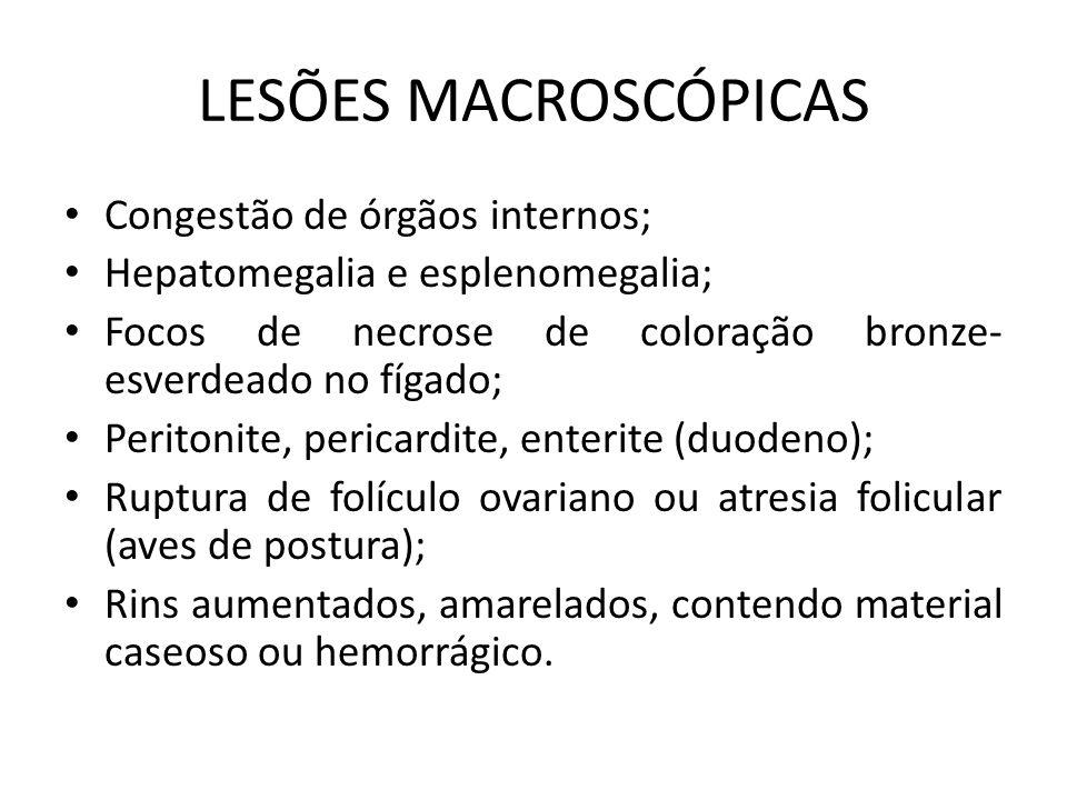 LESÕES MICROSCÓPICAS • Congestão e necrose focal no fígado, baço e ceco; • Hiperplasia linfóide; • Granulomas no peritônio e ovário.