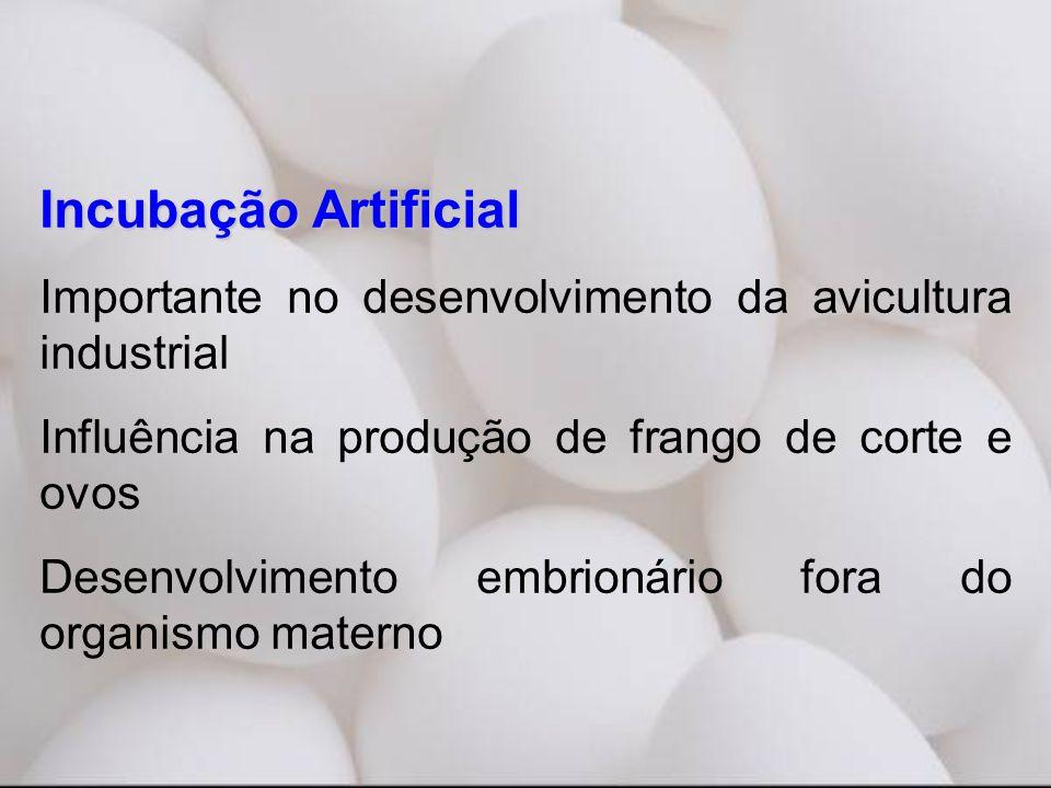 Incubação Artificial Importante no desenvolvimento da avicultura industrial Influência na produção de frango de corte e ovos Desenvolvimento embrionário fora do organismo materno