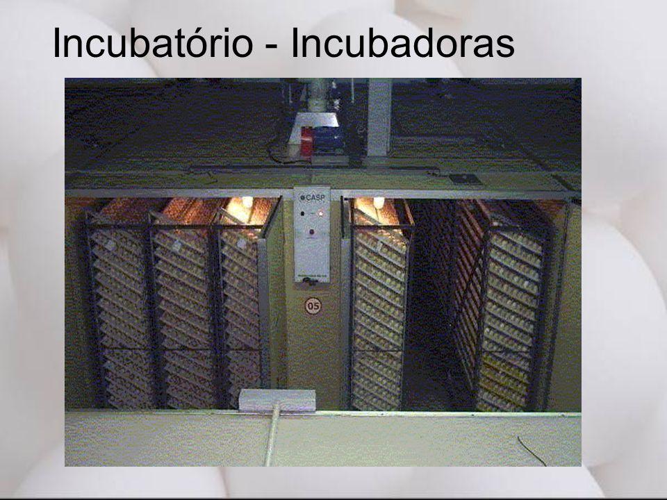 Incubatório - Incubadoras