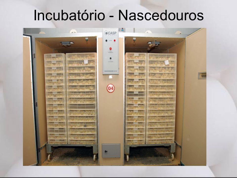 Incubatório - Nascedouros