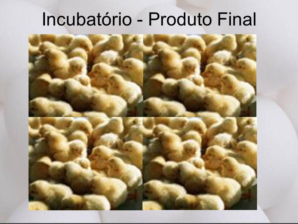 Incubatório - Produto Final